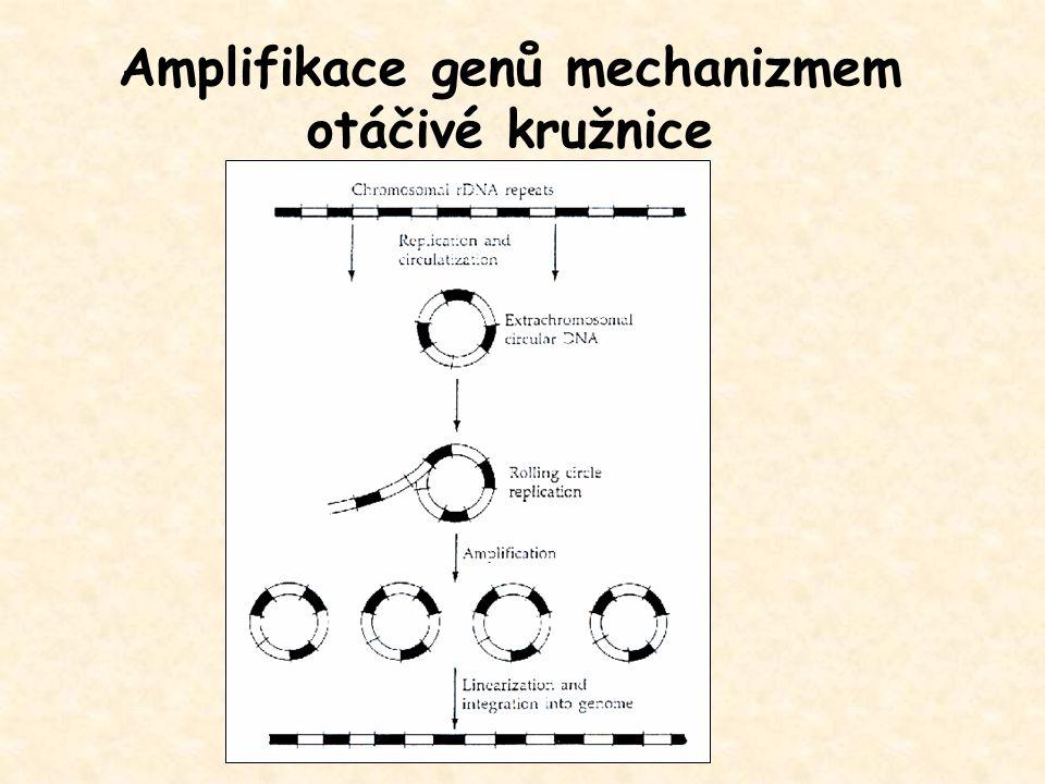 Amplifikace genů mechanizmem otáčivé kružnice