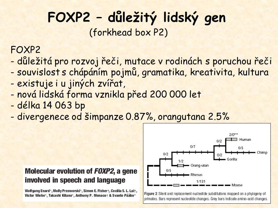 FOXP2 – důležitý lidský gen FOXP2 - důležitá pro rozvoj řeči, mutace v rodinách s poruchou řeči - souvislost s chápáním pojmů, gramatika, kreativita,