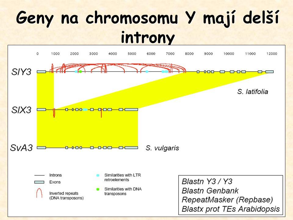 Geny na chromosomu Y mají delší introny