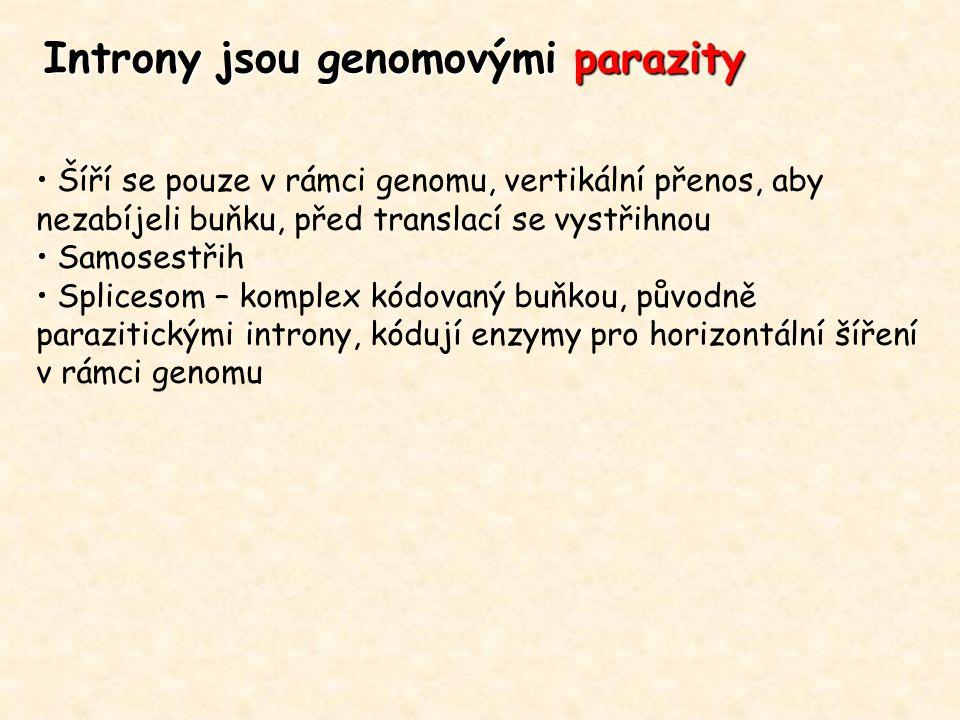 Introny jsou genomovými parazity Šíří se pouze v rámci genomu, vertikální přenos, aby nezabíjeli buňku, před translací se vystřihnou Samosestřih Splic