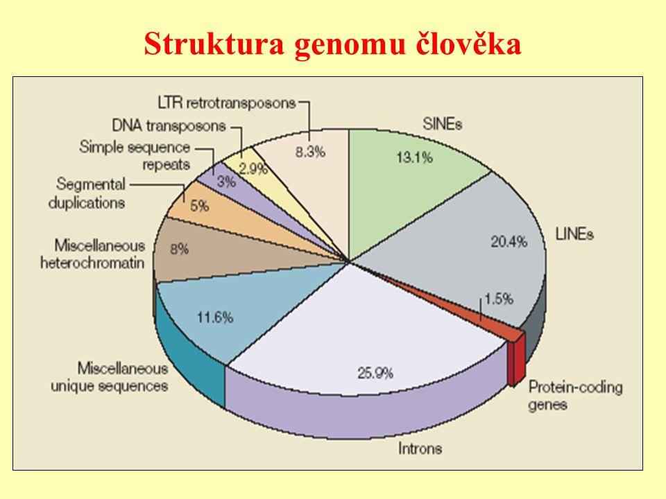 Provedení genové terapie zahrnuje 1/ Vytvoření genetické informace metodami rekombinantní DNA, která je určená pro transport do buněk.