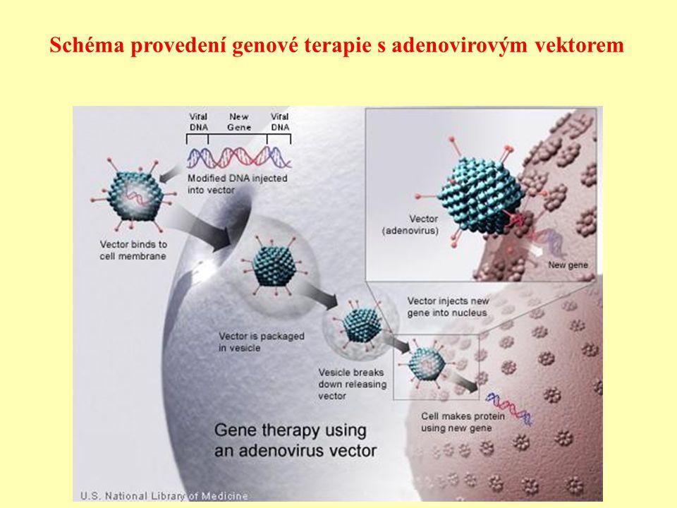 Schéma provedení genové terapie s adenovirovým vektorem
