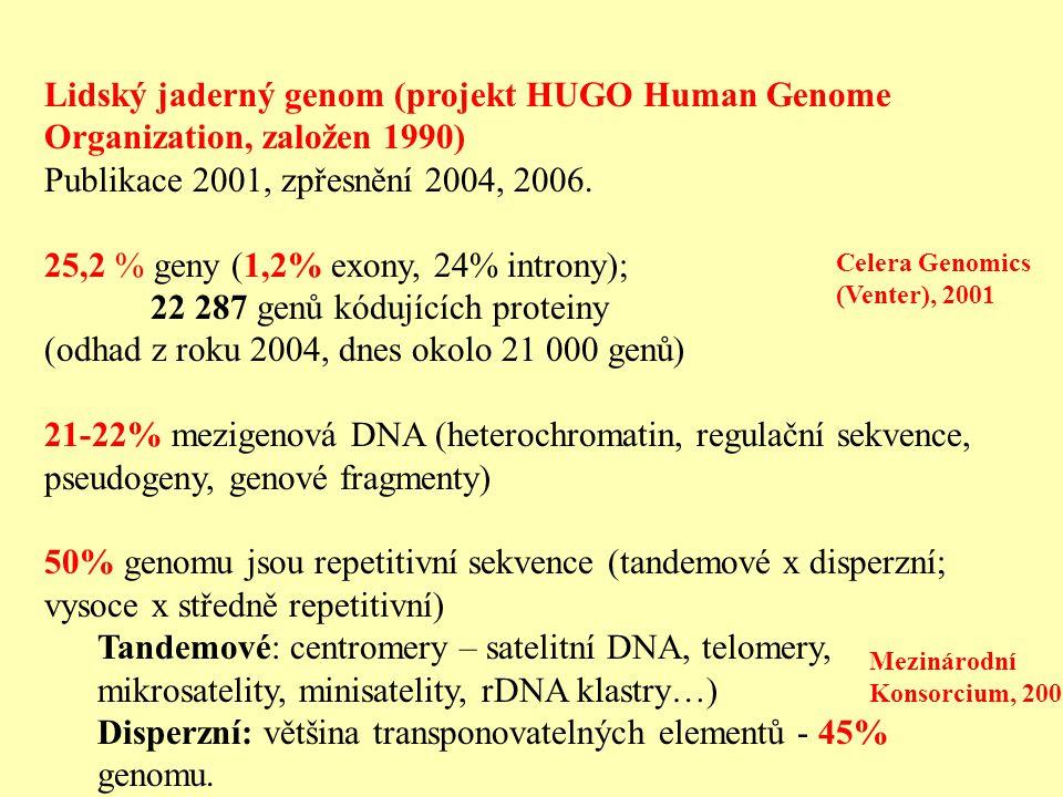 Lidský jaderný genom (projekt HUGO Human Genome Organization, založen 1990) Publikace 2001, zpřesnění 2004, 2006. 25,2 % geny (1,2% exony, 24% introny