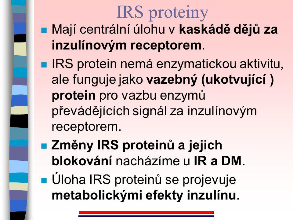 IRS proteiny n Mají centrální úlohu v kaskádě dějů za inzulínovým receptorem. n IRS protein nemá enzymatickou aktivitu, ale funguje jako vazebný (ukot