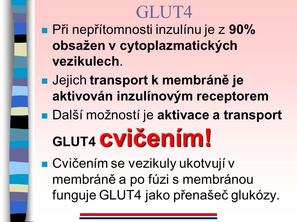 GLUT4 n Při nepřítomnosti inzulínu je z 90% obsažen v cytoplazmatických vezikulech. n Jejich transport k membráně je aktivován inzulínovým receptorem