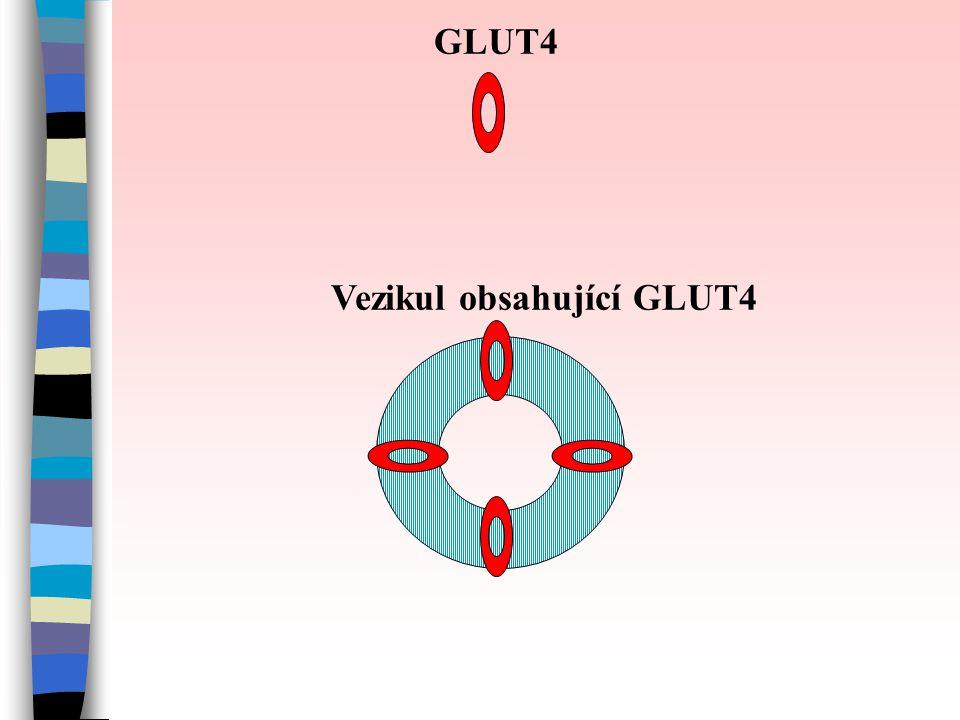 GLUT4 Vezikul obsahující GLUT4