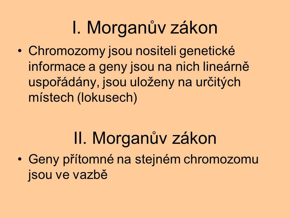 I. Morganův zákon Chromozomy jsou nositeli genetické informace a geny jsou na nich lineárně uspořádány, jsou uloženy na určitých místech (lokusech) II