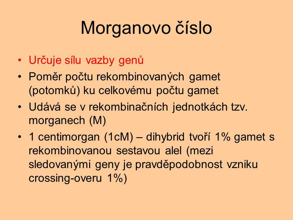 Morganovo číslo Určuje sílu vazby genů Poměr počtu rekombinovaných gamet (potomků) ku celkovému počtu gamet Udává se v rekombinačních jednotkách tzv.