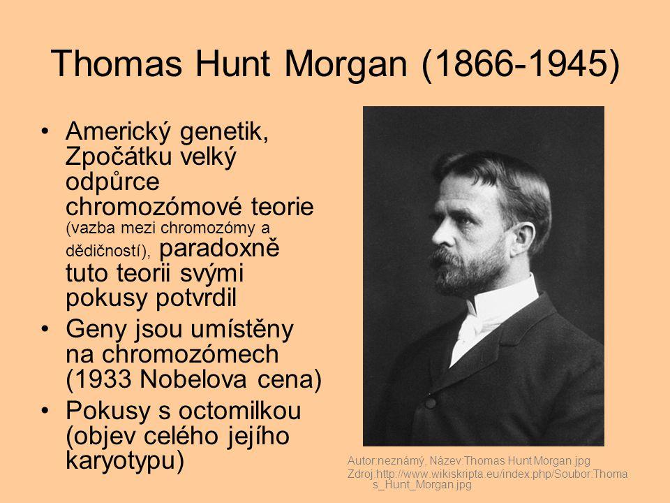 Thomas Hunt Morgan (1866-1945) Americký genetik, Zpočátku velký odpůrce chromozómové teorie (vazba mezi chromozómy a dědičností), paradoxně tuto teorii svými pokusy potvrdil Geny jsou umístěny na chromozómech (1933 Nobelova cena) Pokusy s octomilkou (objev celého jejího karyotypu) Autor:neznámý, Název:Thomas Hunt Morgan.jpg Zdroj:http://www.wikiskripta.eu/index.php/Soubor:Thoma s_Hunt_Morgan.jpg