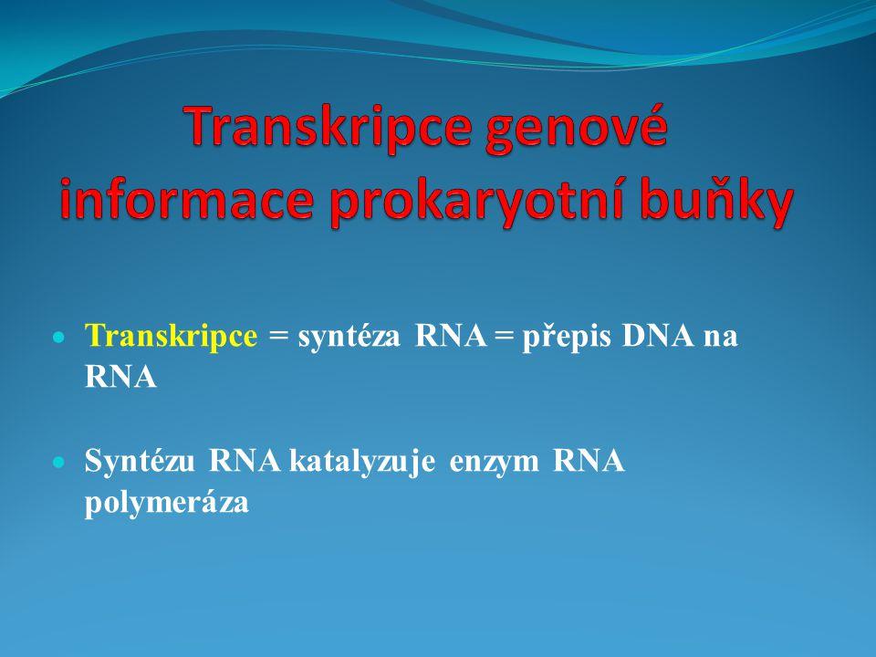  Transkripce = syntéza RNA = přepis DNA na RNA  Syntézu RNA katalyzuje enzym RNA polymeráza