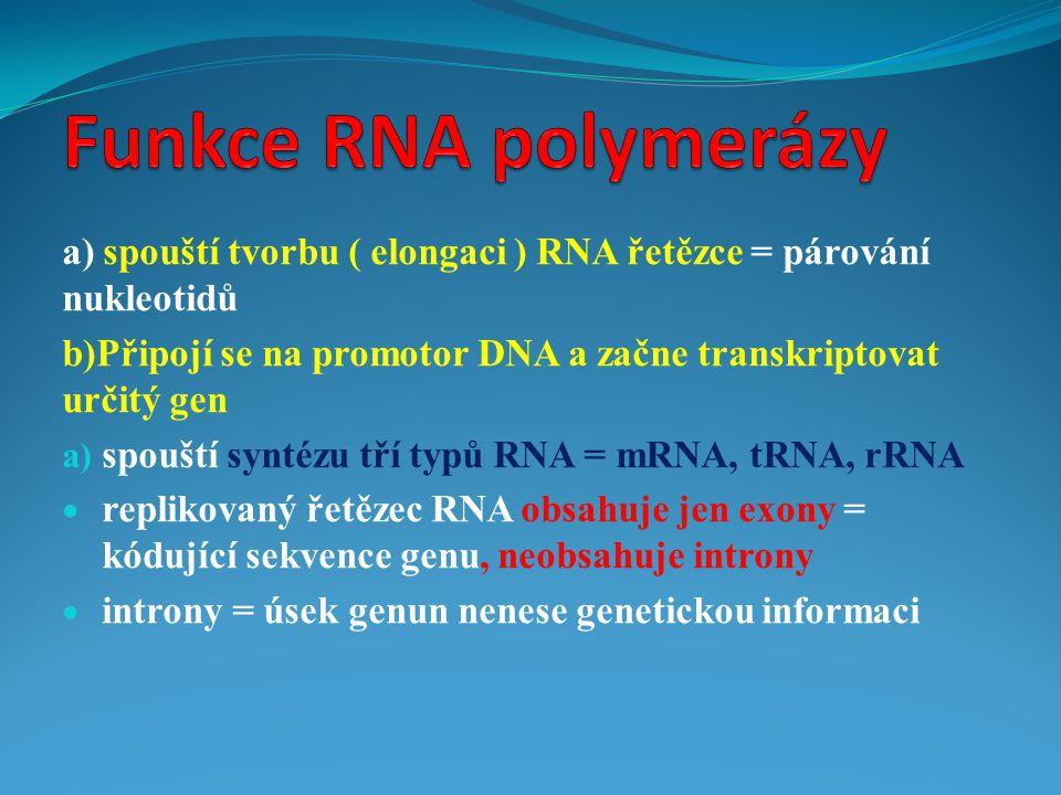 a) spouští tvorbu ( elongaci ) RNA řetězce = párování nukleotidů b)Připojí se na promotor DNA a začne transkriptovat určitý gen a) spouští syntézu tří