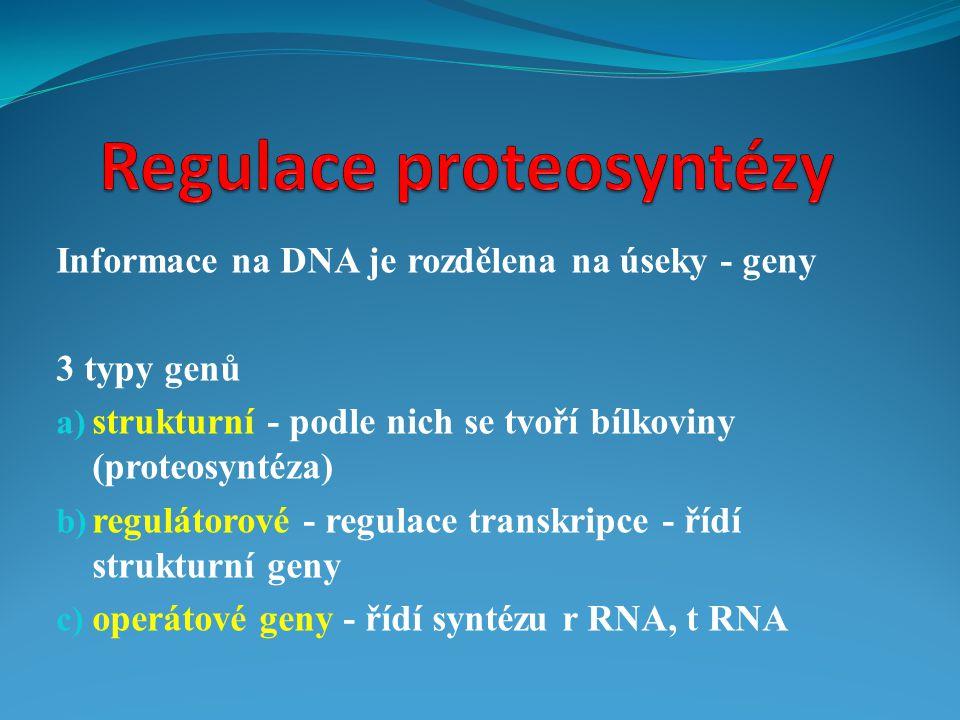 Informace na DNA je rozdělena na úseky - geny 3 typy genů a) strukturní - podle nich se tvoří bílkoviny (proteosyntéza) b) regulátorové - regulace tra