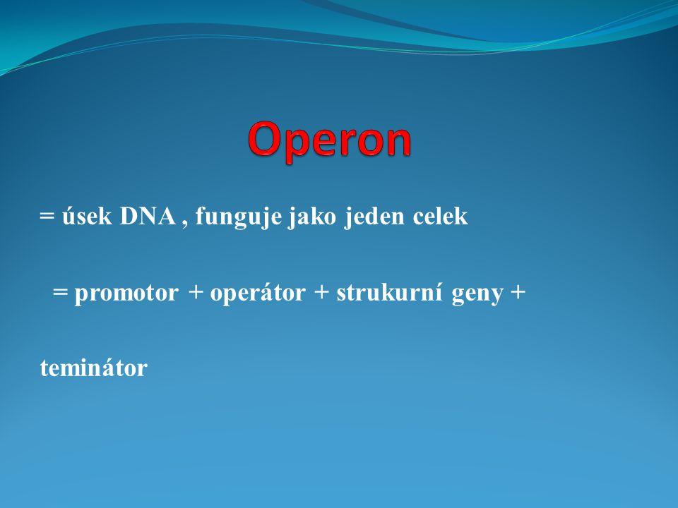 = úsek DNA, funguje jako jeden celek = promotor + operátor + strukurní geny + teminátor