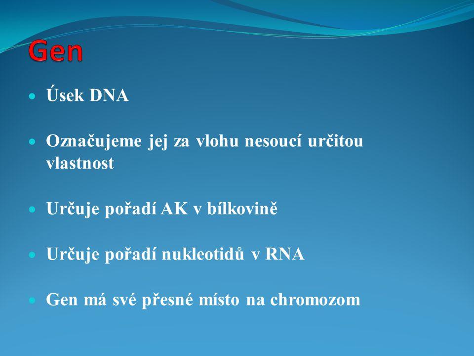  Úsek DNA  Označujeme jej za vlohu nesoucí určitou vlastnost  Určuje pořadí AK v bílkovině  Určuje pořadí nukleotidů v RNA  Gen má své přesné mís