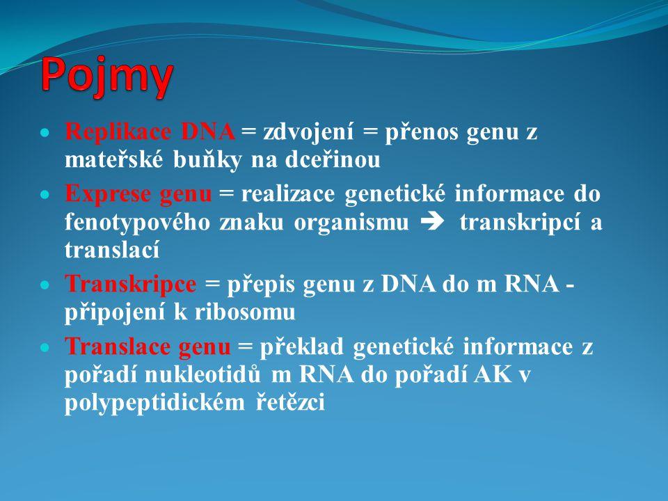  Replikace DNA = zdvojení = přenos genu z mateřské buňky na dceřinou  Exprese genu = realizace genetické informace do fenotypového znaku organismu 