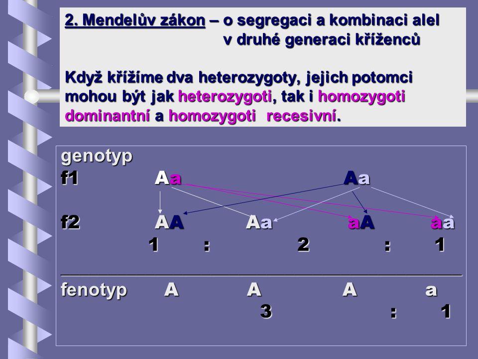 2. Mendelův zákon – o segregaci a kombinaci alel v druhé generaci kříženců Když křížíme dva heterozygoty, jejich potomci mohou být jak heterozygoti, t
