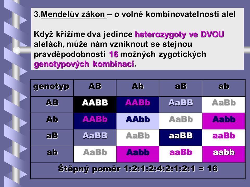 3.Mendelův zákon – o volné kombinovatelnosti alel Když křížíme dva jedince heterozygoty ve DVOU alelách, může nám vzniknout se stejnou pravděpodobnost