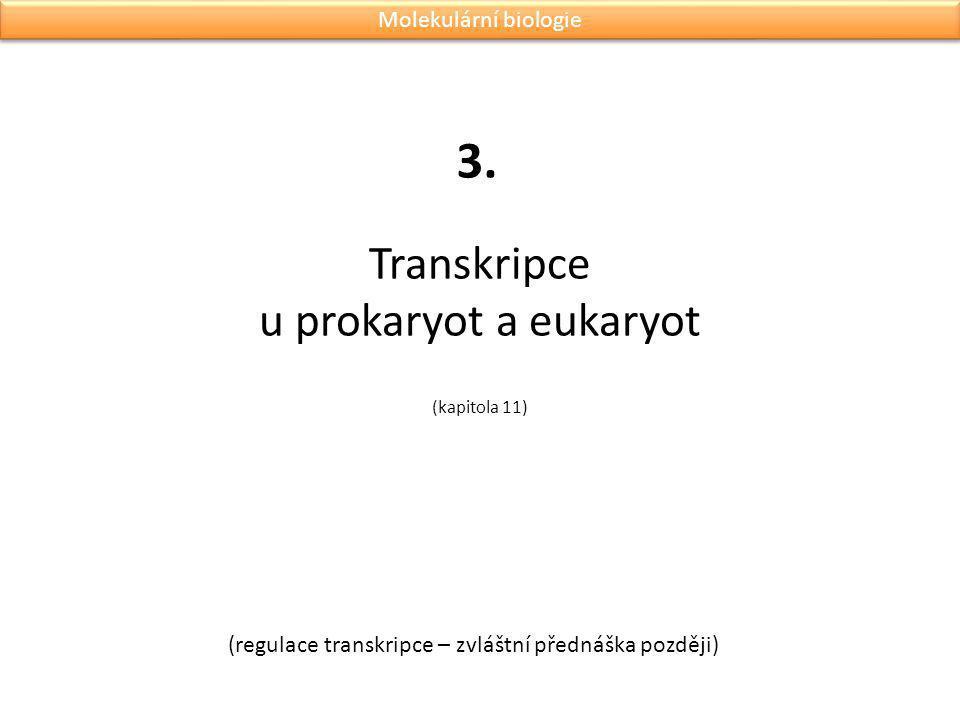Transkripce u prokaryot a eukaryot (kapitola 11) 3. (regulace transkripce – zvláštní přednáška později) Molekulární biologie