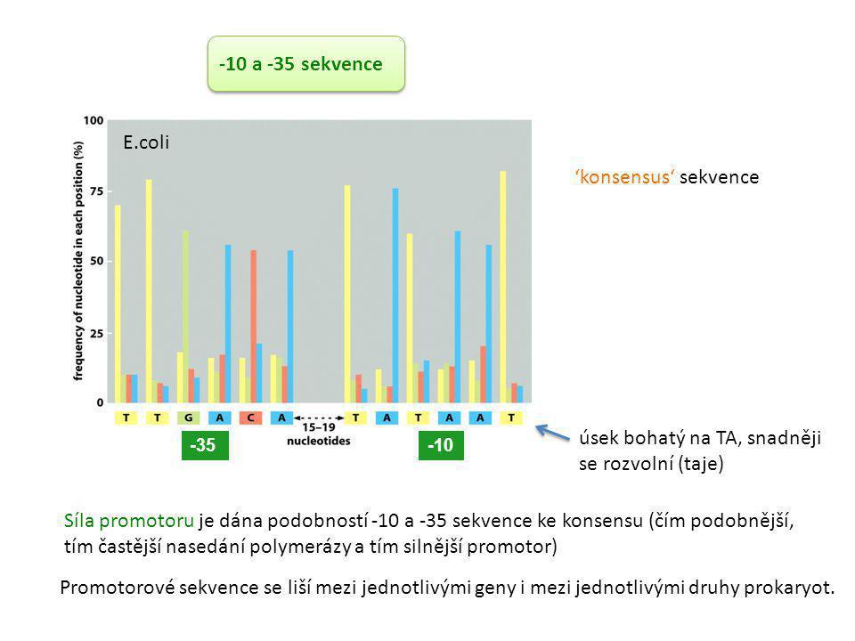 -35-10 Síla promotoru je dána podobností -10 a -35 sekvence ke konsensu (čím podobnější, tím častější nasedání polymerázy a tím silnější promotor) E.c