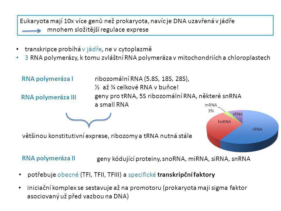 Eukaryota mají 10x více genů než prokaryota, navíc je DNA uzavřená v jádře mnohem složitější regulace exprese transkripce probíhá v jádře, ne v cytopl