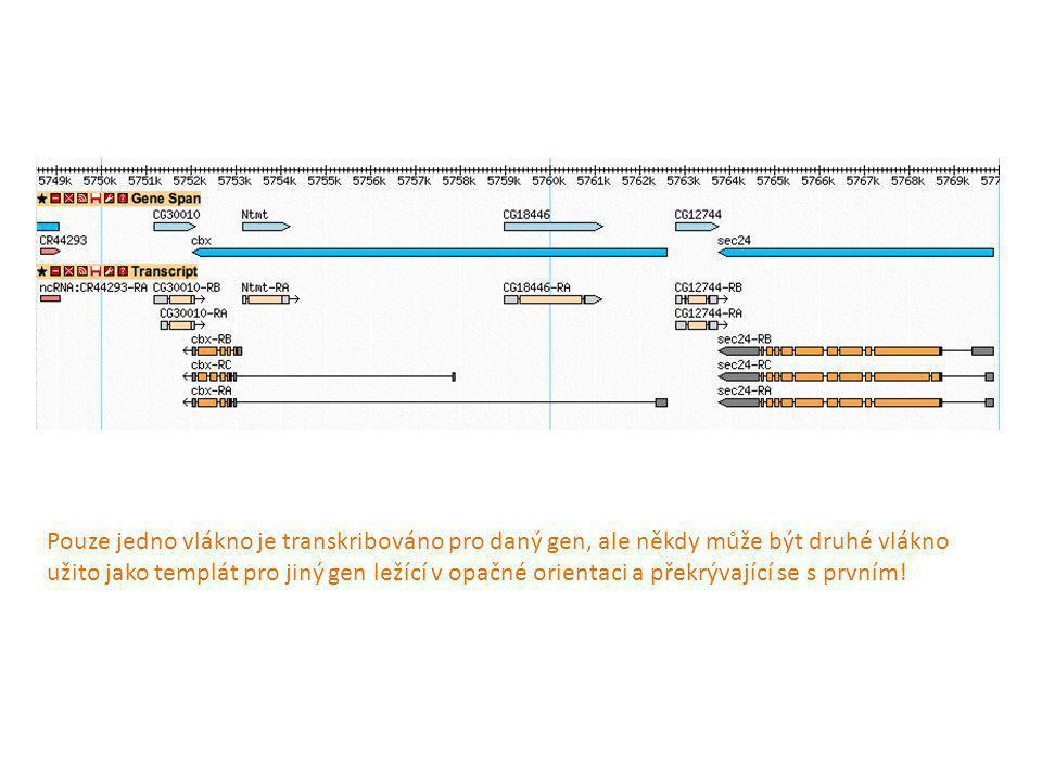 Terminace transkripce u Eukaryot PolI PolIII - podobný prokaryotické terminaci, v RNA je GC bohatá část a za ní 4xU, někdy bez vlásenky.