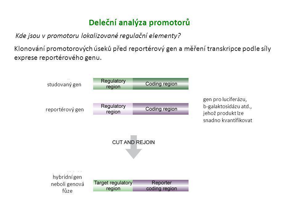 Deleční analýza promotorů Kde jsou v promotoru lokalizované regulační elementy? Klonování promotorových úseků před reportérový gen a měření transkripc