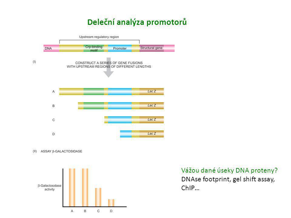 Deleční analýza promotorů enhancer silencer enhancer Vážou dané úseky DNA proteny? DNAse footprint, gel shift assay, ChIP…