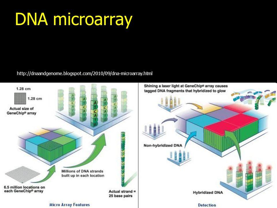 DNA microarray http://dnaandgenome.blogspot.com/2010/09/dna-microarray.html