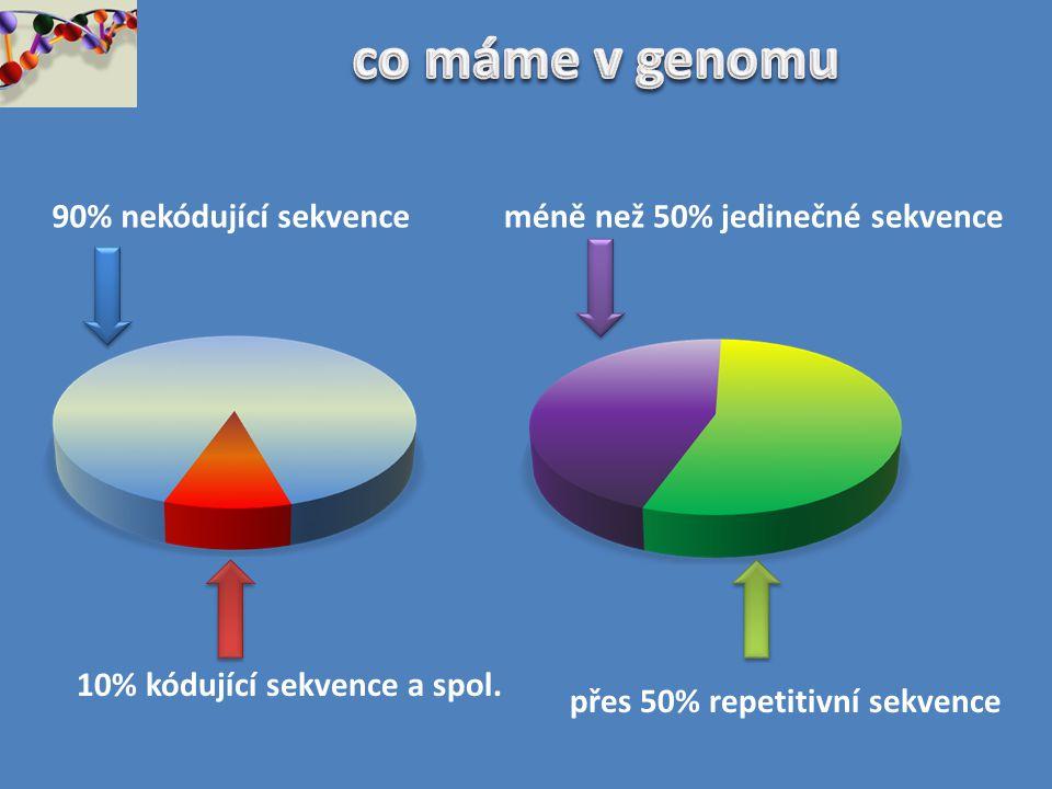 tandemově repetitivní sekvence VYSOCE REPETITIVNÍ NÍZCE REPETITIVNÍ rRNA, tRNA a histonové geny α-satelity minisatelity = VNTR mikrosatelity = STR SINGLE COPY SEKVENCE