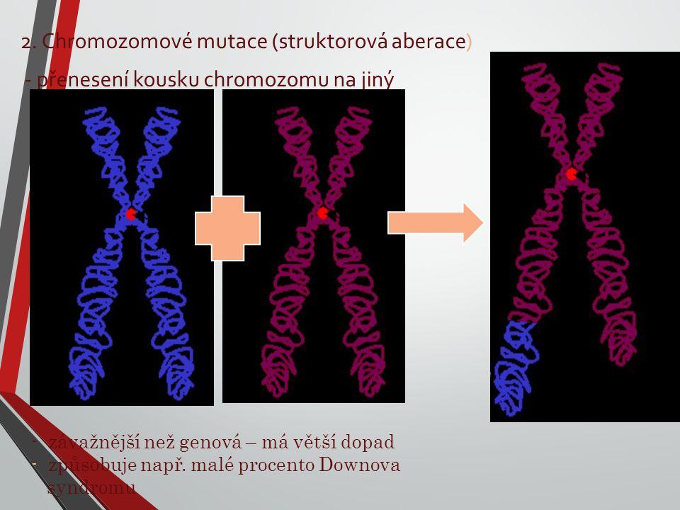 2. Chromozomové mutace (struktorová aberace) - přenesení kousku chromozomu na jiný - závažnější než genová – má větší dopad - způsobuje např. malé pro
