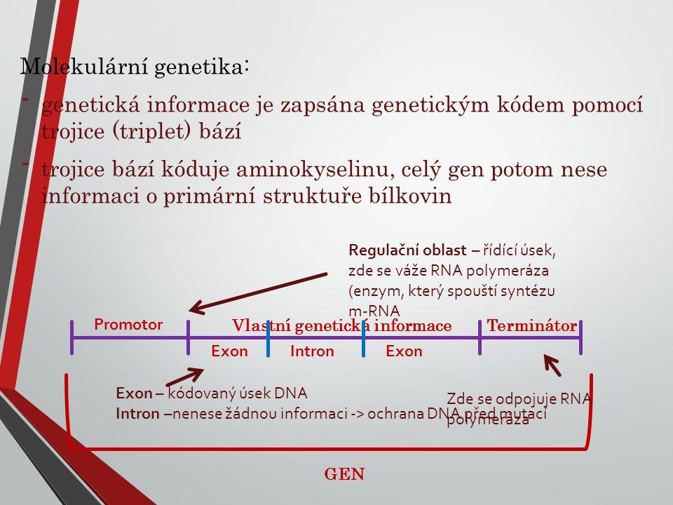 Molekulární genetika: - genetická informace je zapsána genetickým kódem pomocí trojice (triplet) bází - trojice bází kóduje aminokyselinu, celý gen po