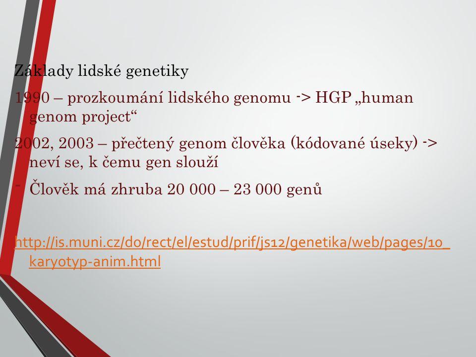 """Základy lidské genetiky 1990 – prozkoumání lidského genomu -> HGP """"human genom project"""" 2002, 2003 – přečtený genom člověka (kódované úseky) -> neví s"""