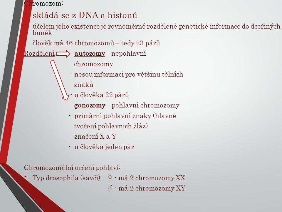 Chromozom: - skládá se z DNA a histonů - účelem jeho existence je rovnoměrné rozdělené genetické informace do dceřiných buněk - člověk má 46 chromozom