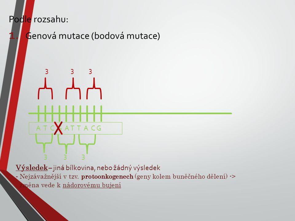 Podle rozsahu: 1. Genová mutace (bodová mutace) A T C G A T T A C G 3 3 3 Výsledek – jiná bílkovina, nebo žádný výsledek - Nejzávažnější v tzv. protoo