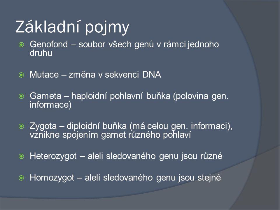 Základní pojmy  Genofond – soubor všech genů v rámci jednoho druhu  Mutace – změna v sekvenci DNA  Gameta – haploidní pohlavní buňka (polovina gen.