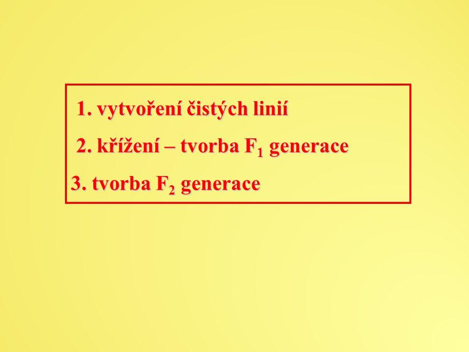 1.vytvoření čistých linií 2. křížení – tvorba F 1 generace 1.