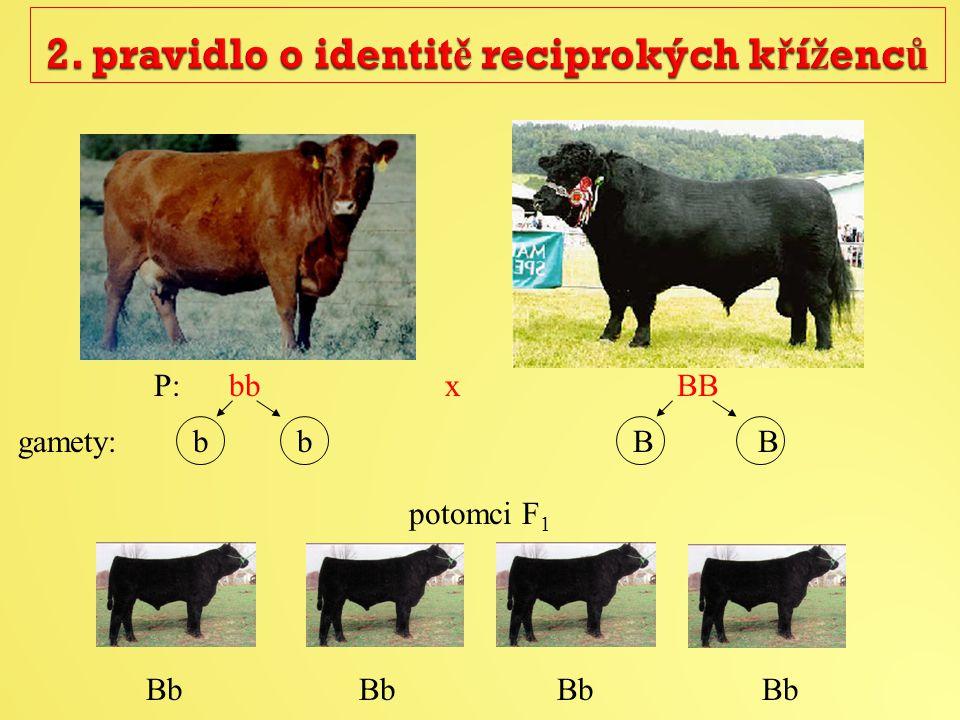 P: bb x BB potomci F 1 Bb Bb Bb Bb gamety: b b B B