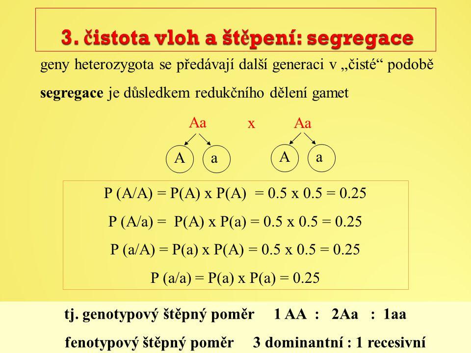 """geny heterozygota se předávají další generaci v """"čisté podobě segregace je důsledkem redukčního dělení gamet Aa Aa P (A/A) = P(A) x P(A) = 0.5 x 0.5 = 0.25 P (A/a) = P(A) x P(a) = 0.5 x 0.5 = 0.25 P (a/A) = P(a) x P(A) = 0.5 x 0.5 = 0.25 P (a/a) = P(a) x P(a) = 0.25 tj."""