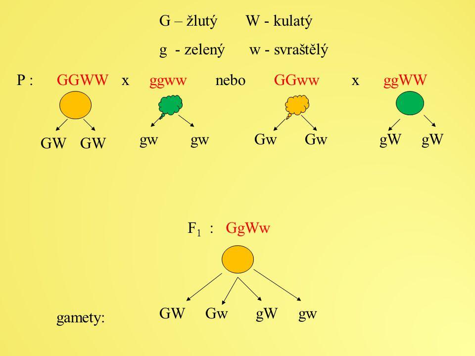 P : GGWW x ggww nebo GGww x ggWW G – žlutý W - kulatý g - zelený w - svraštělý F 1 : GgWw GW gw Gw Gw gW gW GW Gw gW gw gamety: