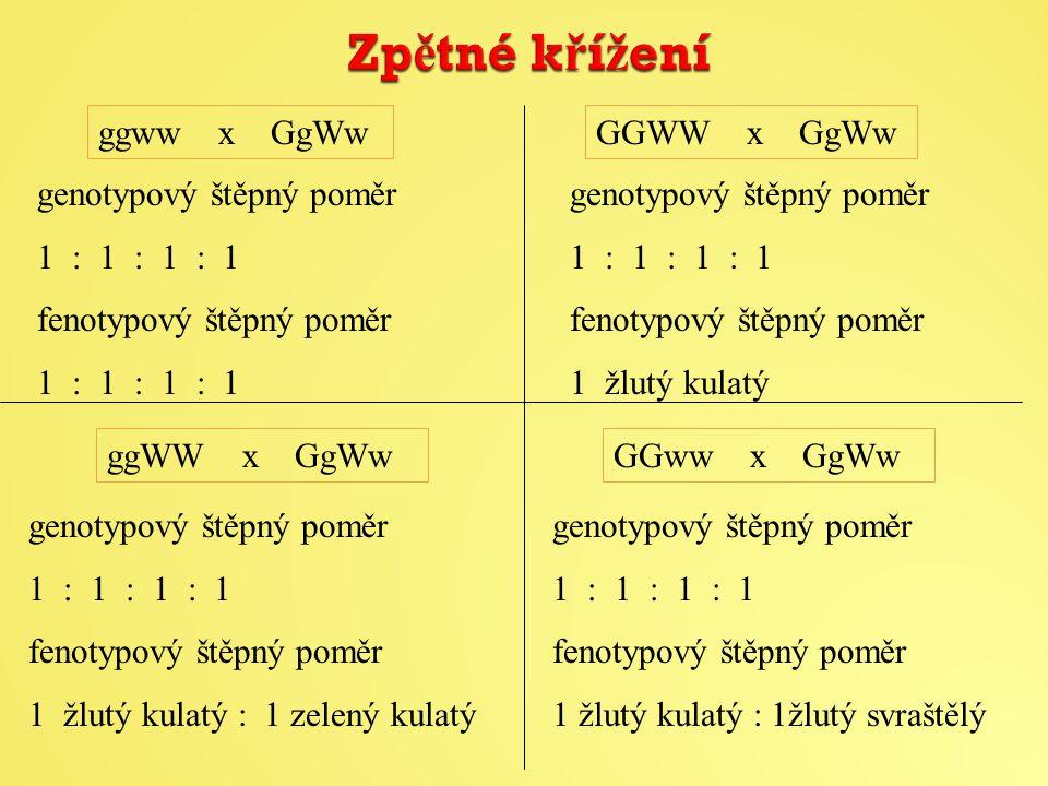 ggww x GgWwGGWW x GgWw ggWW x GgWwGGww x GgWw genotypový štěpný poměr 1 : 1 : 1 : 1 fenotypový štěpný poměr 1 : 1 : 1 : 1 genotypový štěpný poměr 1 : 1 : 1 : 1 fenotypový štěpný poměr 1 žlutý kulatý genotypový štěpný poměr 1 : 1 : 1 : 1 fenotypový štěpný poměr 1 žlutý kulatý : 1 zelený kulatý genotypový štěpný poměr 1 : 1 : 1 : 1 fenotypový štěpný poměr 1 žlutý kulatý : 1žlutý svraštělý