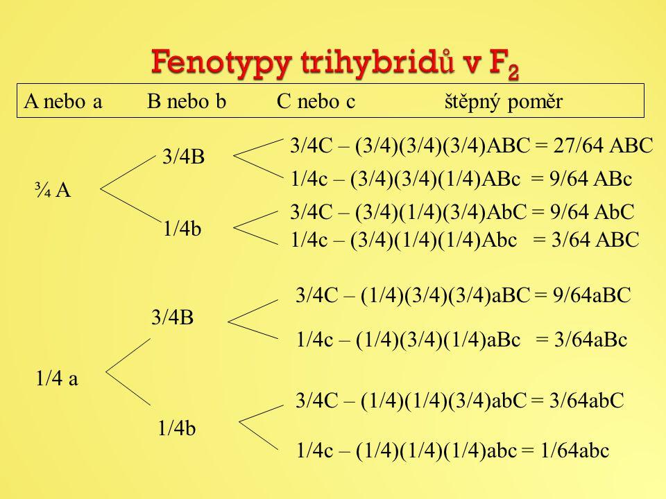 A nebo a B nebo b C nebo c štěpný poměr ¾ A 1/4 a 3/4B 3/4C – (3/4)(3/4)(3/4)ABC = 27/64 ABC 1/4c – (3/4)(3/4)(1/4)ABc = 9/64 ABc 3/4C – (3/4)(1/4)(3/4)AbC = 9/64 AbC 1/4c – (3/4)(1/4)(1/4)Abc = 3/64 ABC 1/4b 3/4C – (1/4)(3/4)(3/4)aBC = 9/64aBC 1/4c – (1/4)(3/4)(1/4)aBc = 3/64aBc 3/4C – (1/4)(1/4)(3/4)abC = 3/64abC 1/4c – (1/4)(1/4)(1/4)abc = 1/64abc