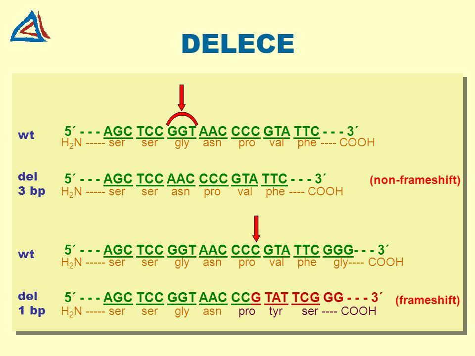 DELECE 5´ - - - AGC TCC GGT AAC CCC GTA TTC - - - 3´ 5´ - - - AGC TCC AAC CCC GTA TTC - - - 3´ 5´ - - - AGC TCC GGT AAC CCC GTA TTC GGG- - - 3´ 5´ - -