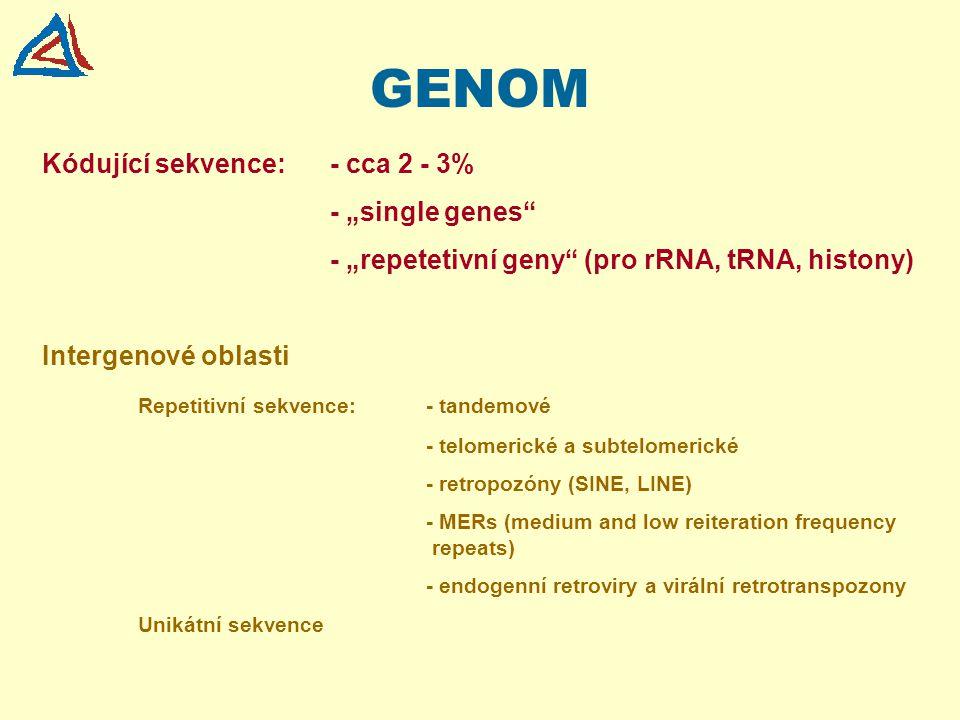 """GENOM Kódující sekvence:- cca 2 - 3% - """"single genes"""" - """"repetetivní geny"""" (pro rRNA, tRNA, histony) Intergenové oblasti Repetitivní sekvence:- tandem"""