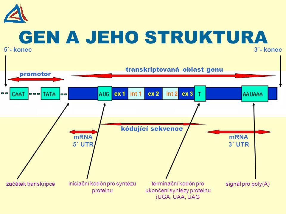 GEN A JEHO STRUKTURA