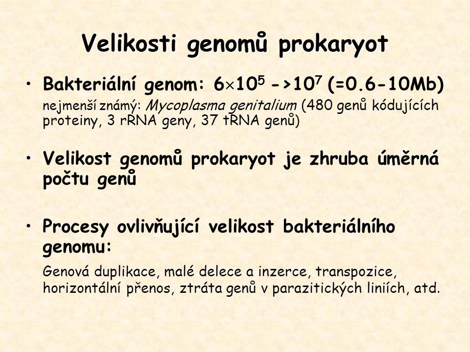 Velikosti genomů prokaryot Bakteriální genom: 6  10 5 ->10 7 (=0.6-10Mb) nejmenší známý : Mycoplasma genitalium (480 genů kódujících proteiny, 3 rRNA