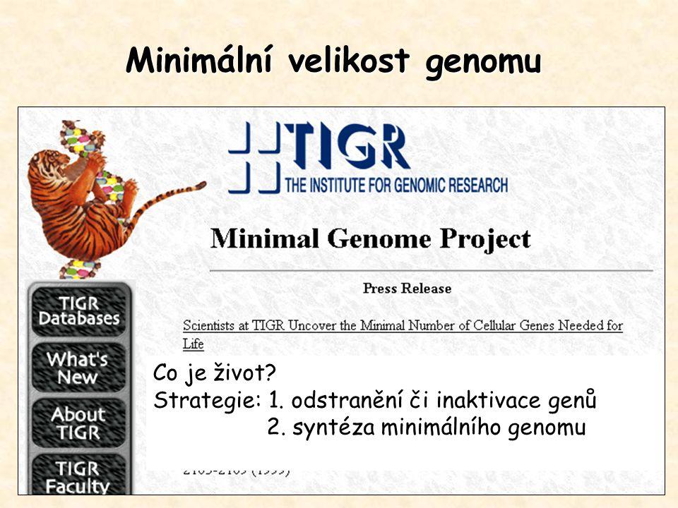 Minimální velikost genomu Co je život? Strategie: 1. odstranění či inaktivace genů 2. syntéza minimálního genomu