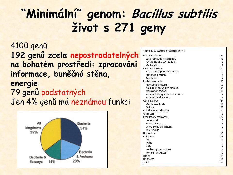 """""""Minimální"""" genom: Bacillus subtilis život s 271 geny 4100 genů 192 genů zcela nepostradatelných na bohatém prostředí: zpracování informace, buněčná s"""