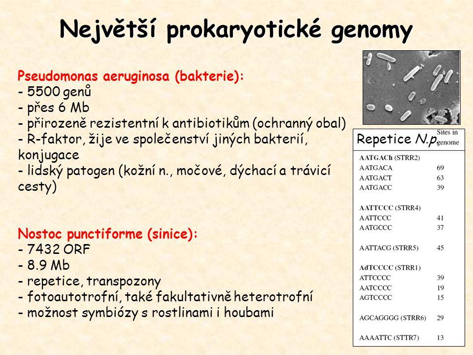 Největší prokaryotické genomy Pseudomonas aeruginosa (bakterie): - 5500 genů - přes 6 Mb - přirozeně rezistentní k antibiotikům (ochranný obal) - R-fa