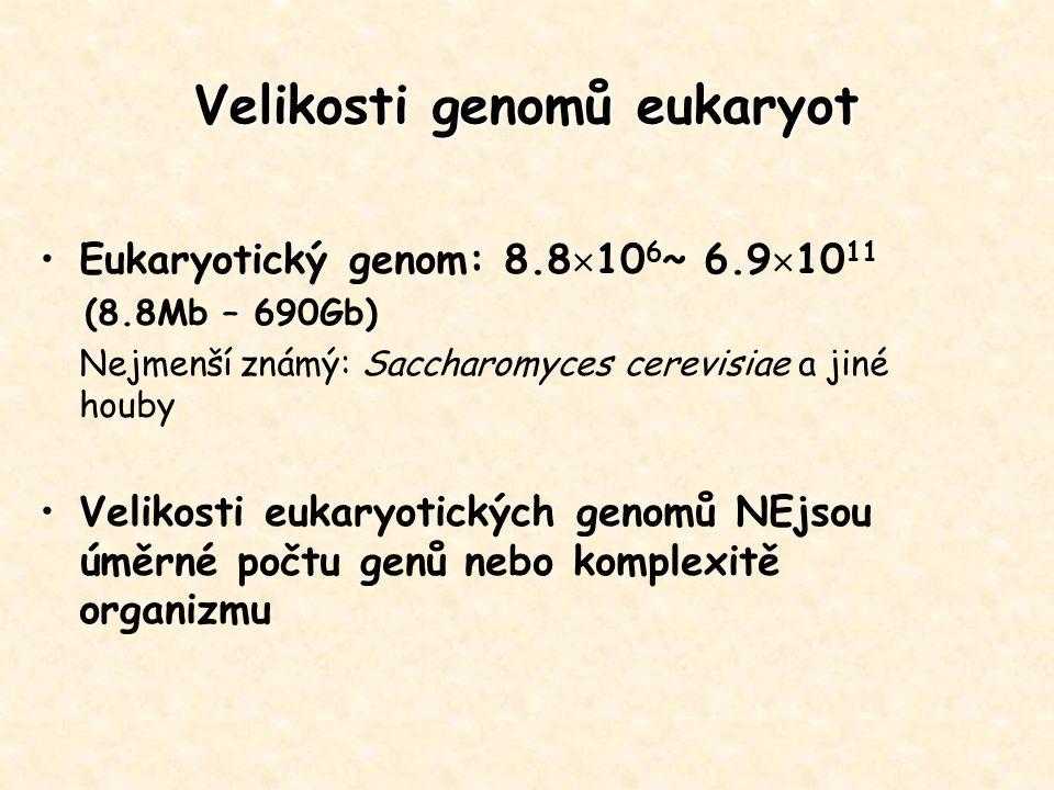Eukaryotický genom: 8.8  10 6 ~ 6.9  10 11 (8.8Mb – 690Gb) Nejmenší známý: Saccharomyces cerevisiae a jiné houby Velikosti eukaryotických genomů NEj