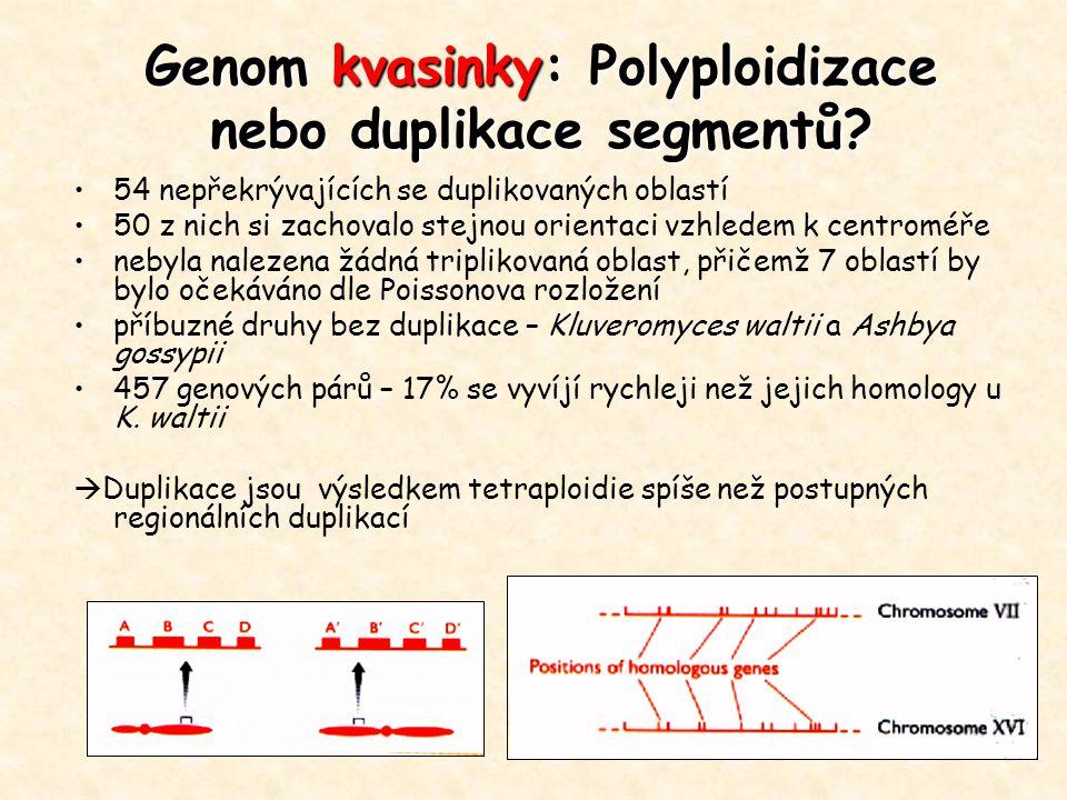 Genom kvasinky: Polyploidizace nebo duplikace segmentů? 54 nepřekrývajících se duplikovaných oblastí 50 z nich si zachovalo stejnou orientaci vzhledem